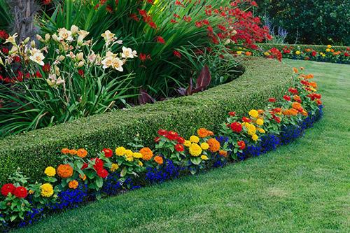 Бордюры из цветов в ландшафтном дизайне