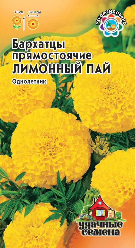Лимонный пай - сорт прямостоячих бархатцев