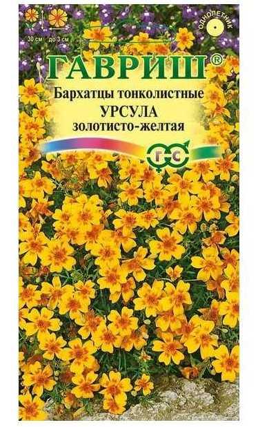 Урсула золотисто-желтая сорт тонколистных бархатцев