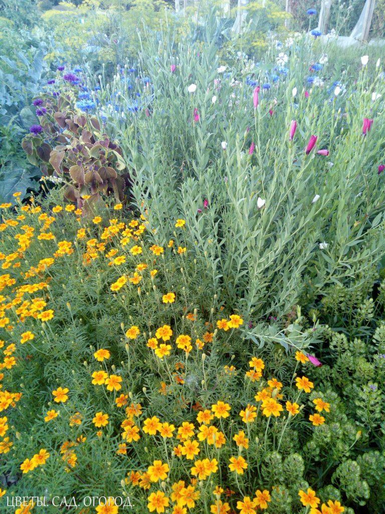 Цветочная группа из однолетников. Самым простым и распространенным видом ландшафтного цветочного оформления является цветочная группа. Это посадки, состоящие из растений 5–8 видов, каждое из которых представлено в небольшом количестве. Группа имеет свободные очертания.