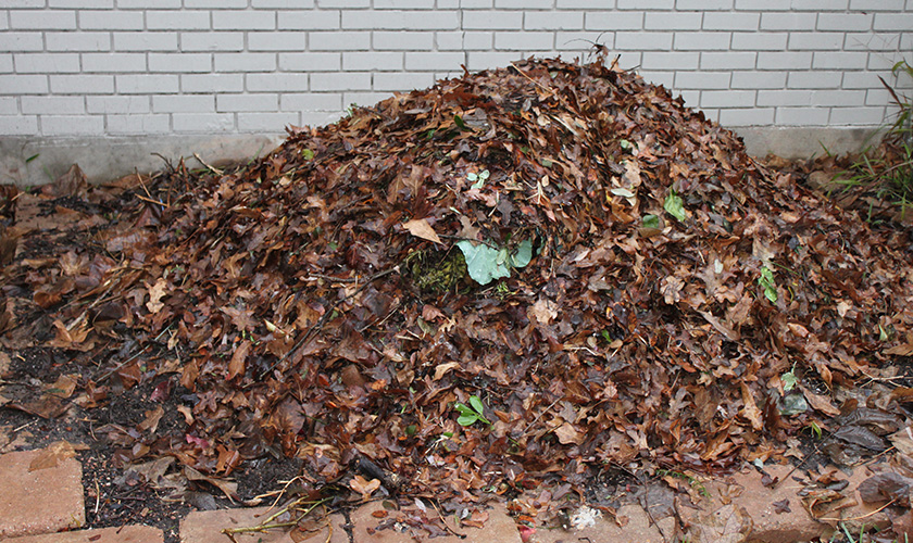 Опавшие листья для компоста. Из опавшей в саду лиственной массы готовится отличный компост, пригодный для повышения плодородности почвы. Решение позволяет снизить затраты на другие удобрения органического характера