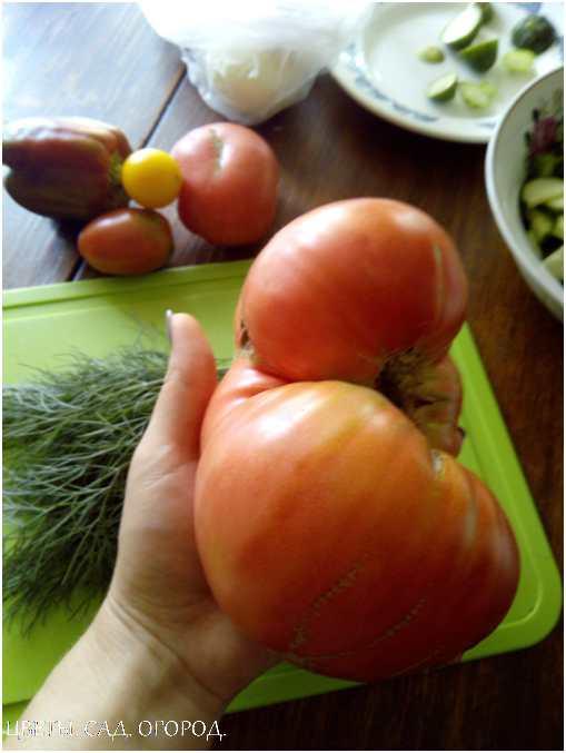 Томат, выращенный своими руками. Каждый, уважающий себя дачник, выращивает помидоры на своём огороде.