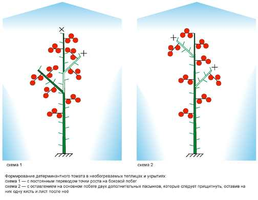 Формировка должна быть увязана сгустотой посадки. Имеет значение непросто число растений наединице площади, ноичисло стеблей.