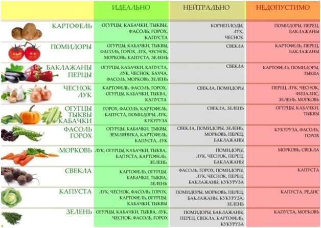Севооборот овощных культур