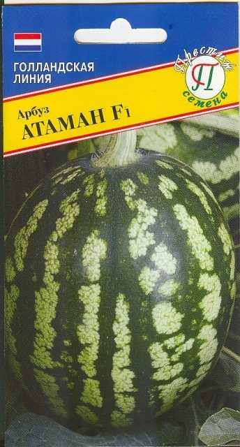 Сорт арбуза - Атаман F1. 55-65 дней, под пленкой – через 40-45 дней. Плоды эллипсовидные, мякоть имеет насыщенный сладкий вкус. Плоды до 16 кг.
