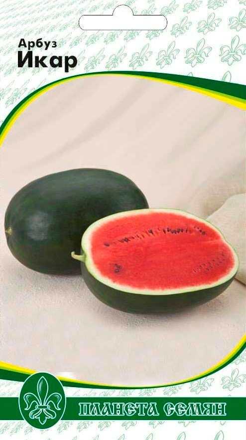 Сорт арбуза - ИКАР. Арбузы эллипсовидной формы весом 3-4,5 кг имеют темно-зеленую кожицу средней толщины с едва заметной сеточкой и зернистую малиновую мякоть, очень вкусную и хрустящую.Культура поражается антракнозом при выращивании под пленкой, на бахче заболевание не возникает.