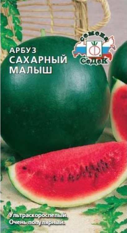 Сорт арбуза - САХАРНЫЙ МАЛЫШ. Период вегетации 75-80 дней. Средний вес 4-6 кг. Сладкие, с хорошим вкусом.