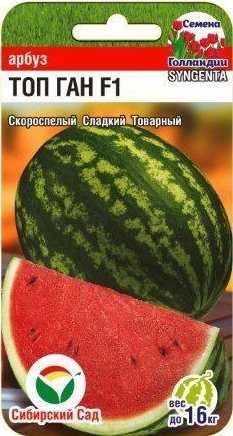 Сорт арбуза - ТОП ГАН F1. 60-65 дней, плоды большие, округло-кубовидной формы. Масса до 16 килограмм. Кожура зеленая, отчетливо видны полосы. Мякоть сочная, сахаристая, нежная. Это самый крупный арбуз среди ранних.