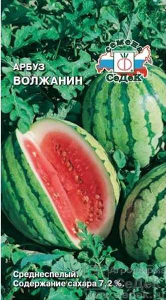 Сорт арбуза - Волжанин. Сладкий вкус. Светло – зелёный, вес до 16 кг. Красная мякоть. 80 – 85 дней. Устойчивый к засухе сорт арбуза. Транспортабельный сорт. Растения длинноплетистые (длина главной плети более 3 метров), с узкодольными, сильнорассечеными листьями, устойчивы к засухе, пониженным температурам и болезням.