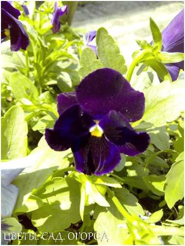 Научитесь правильно ухаживать за цветами, и они порадуют вас буйным цветением и приятным ароматом.