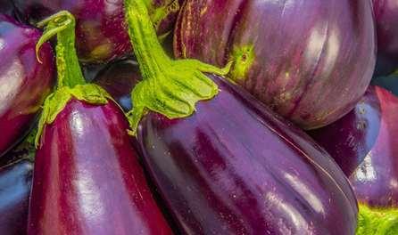 Баклажаны требуют больше внимания и ухода, чем перцы и томаты, но вкусовые качества плодов станут достойной наградой за труд.