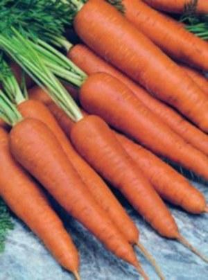 Морковь сортотипа Флакке (Валерия)