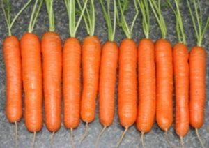 Сортотип моркови Нантская