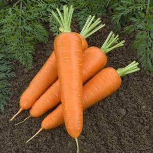 Морковь сортотипа «Шантенэ Данверс»